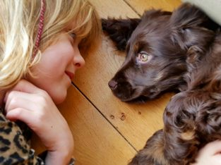 mediamieke afstemmingen op uw dier, aanvullend homeopathie indien nodig